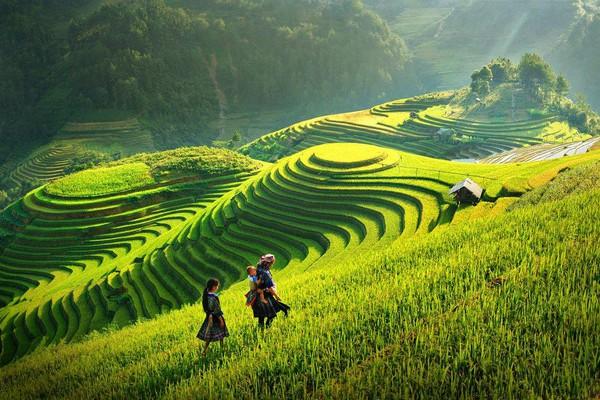 """Du lịch Hoàng Su Phì – săn """"mùa vàng"""" ở Hà Giang"""